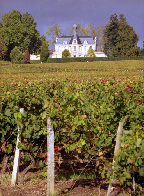 Chateau Chemin Royal - Vignes