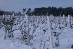 Château Granins Grand Poujeaux - Sous la neige