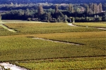 Chateau Chemin Royal - Vignes + Moulin