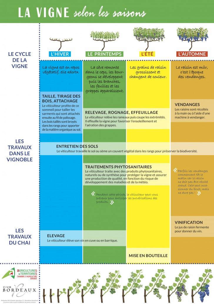2020_04_16 - Infographie Vigne saisons - CA33-CIVB