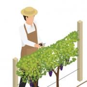 2020_04_16 - Infographie Métier viti - extrait